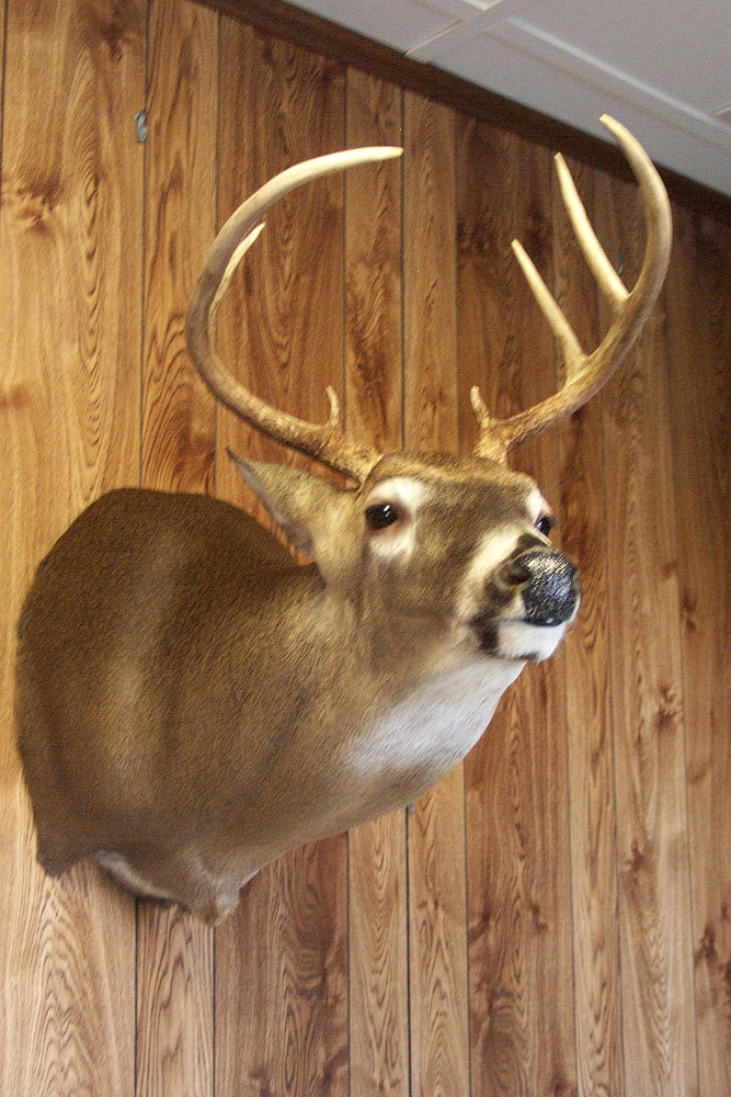 Nc Taxidermist Whitetail Taxidermy Gallery Bowmans